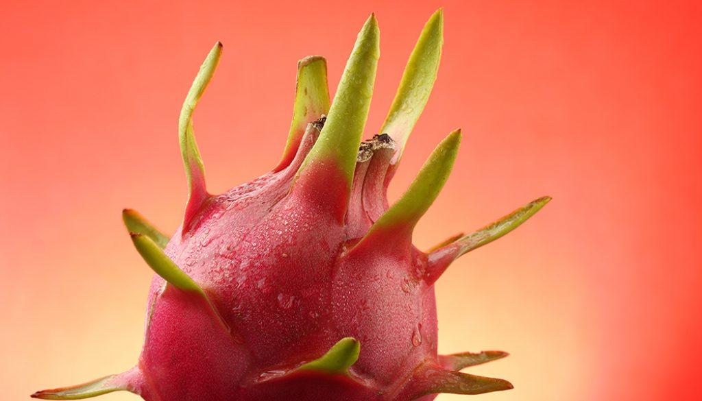 yogyakarta jakarta bandung semarang solo medan surabaya farm farming dragon fruit photography photographer panggilan